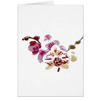 Phalaenopsis Orchid Flower Bouquet Card