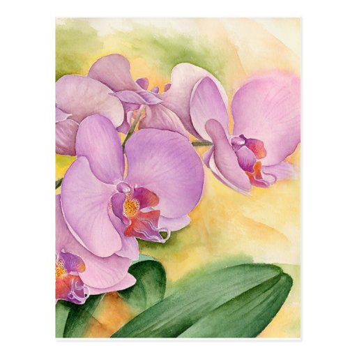 Phalaenopsis Orchid Flowers - Multi Post Cards