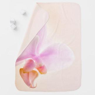 Phalaenopsis Orchid Glad Dawn 'Pink Cheer' Pramblanket
