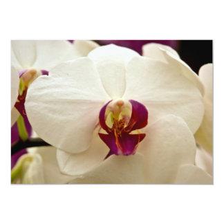 Phalaenopsis Orchid 13 Cm X 18 Cm Invitation Card