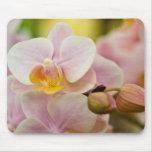 Phalaenopsis Orchid Mousepad