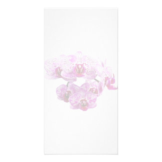 Phalaenopsis OX Happy Girl Orchid Personalized Photo Card