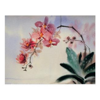 Phalaenopsis Postcard