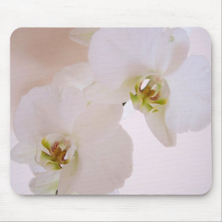 Phalaenopsis White Wild Orchid flowers in bloom Mouse Mat