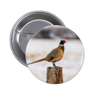 Pheasant 6 Cm Round Badge