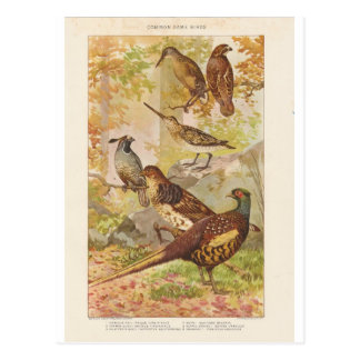 Pheasant and Other Game Postcards