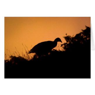 Pheasant at Sunset Card