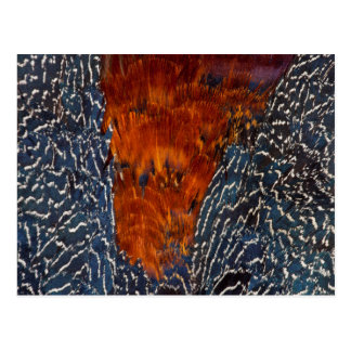 Pheasant Feather Design Abstract Postcard