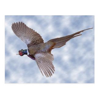 Pheasant In Flight Post Cards