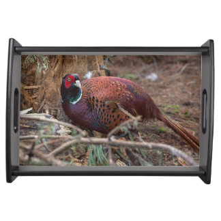 Pheasant nature photography picture  serving tray