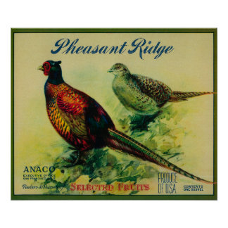 Pheasant Ridge Apple Crate Label Poster