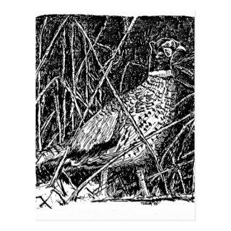 Pheasant (Rooster) Postcard