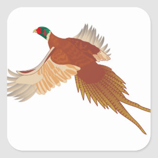 Pheasant Square Sticker