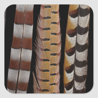 Pheasant tail feathers square sticker