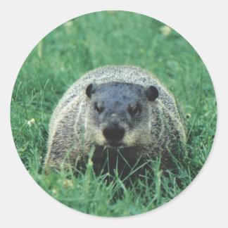 Phil Groundhog Classic Round Sticker