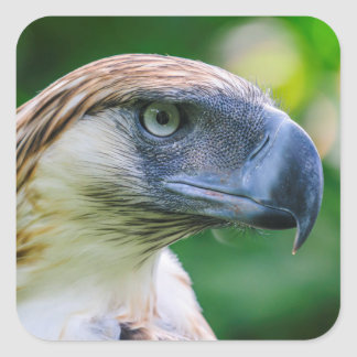 Philippine Eagle Head Detail Square Sticker