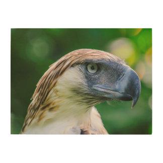 Philippine Eagle Head Detail Wood Wall Art