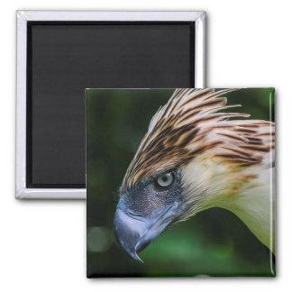 Philippine Eagle Portrait Magnet