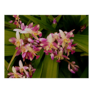 Philippine Ground Orchids Poster