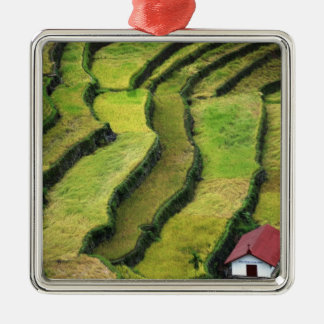 Philippines, Batad, elevated view of rice Christmas Ornament
