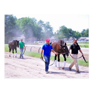 Phipps Thoroughbreds at Saratoga Postcard