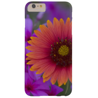 Phlox and Indian Blanket near Devine Texas Barely There iPhone 6 Plus Case