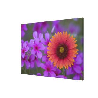 Phlox and Indian Blanket near Devine Texas Canvas Print