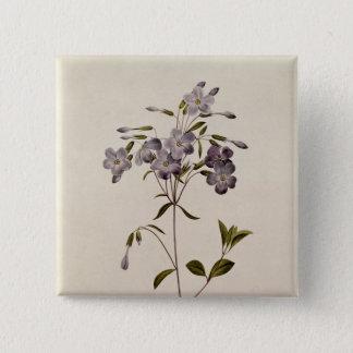 Phlox reptans 15 cm square badge