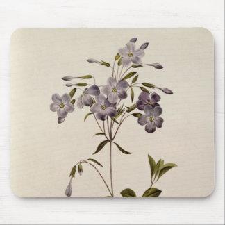 Phlox reptans mouse pad