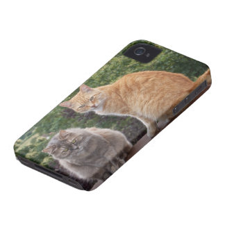 Phoebe and Levi Case-Mate iPhone 4 Cases
