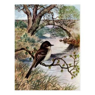 Phoebe and Stone Bridge Over Creek Postcard