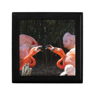 phoenicopterus ruber ruber red flamingo gift box