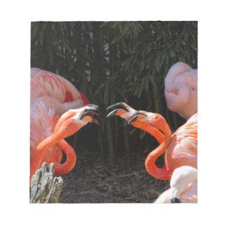 phoenicopterus ruber ruber red flamingo notepad