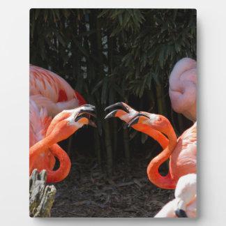 phoenicopterus ruber ruber red flamingo plaque