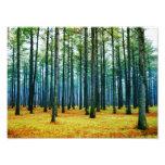 Photo Beautiful Pine Tree Forest Yellow Grass