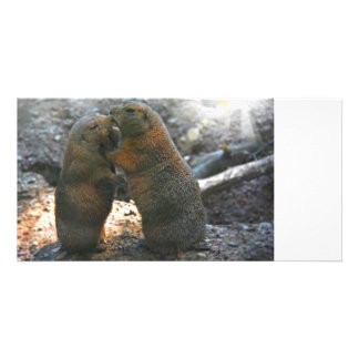 Photo card with cute marmot couple