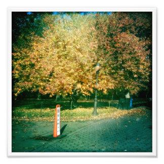 Photo: Central Park, Fall