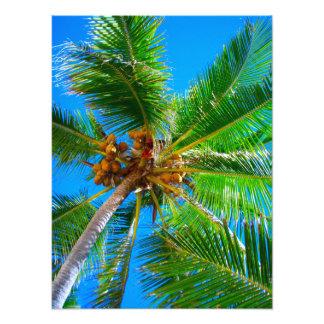 Photo   Coconut palm tree Vanuatu