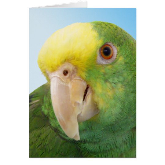 Photo Double Yellow Headed Amazon Parrot Card