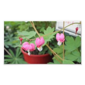Photo Enlargement - pink floral vine