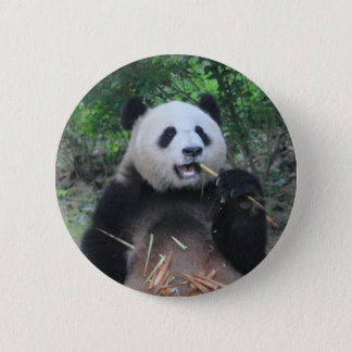 Photo Giant Panda 6 Cm Round Badge