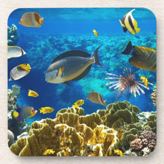 Photo of a tropical Fish on a coral reef Coaster