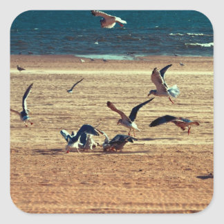 Photo of Coney Island Beach w/Seagulls Square Sticker