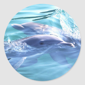 Photo of Dolphins Sticker