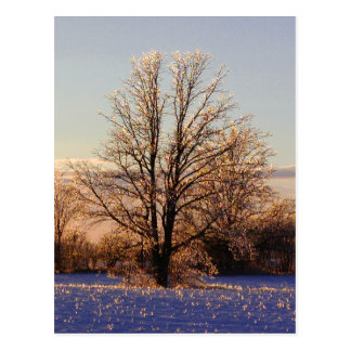 Photo of ice-covered tree postcard