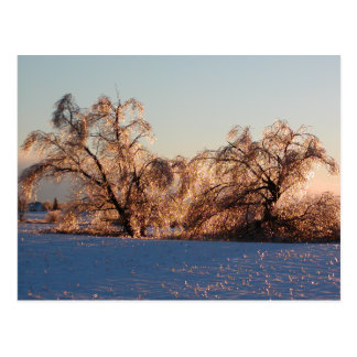photo of ice-covered trees postcard