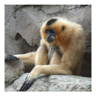 Photo of Orange and Black Gibbon Relaxing on Cliff