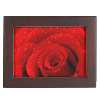 Photo of Red Rose Background Memory Box
