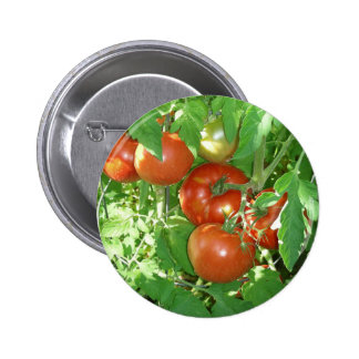 Photo of ripe red tomatoes on the vine. 6 cm round badge