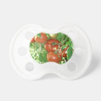Photo of ripe red tomatoes on the vine baby pacifiers